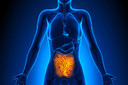 Science Translational Medicine: revestimento sintético no intestino delgado pode ajudar a tratar diabetes e obesidade
