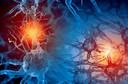 Novo tipo de neurônio descoberto apenas em cérebros de primatas pode ajudar os cientistas a melhorar os estudos sobre doenças neuropsiquiátricas