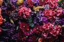 Presentear pacientes internados com flores não é uma boa opção. Em hospitais, as flores representam riscos de infecção.